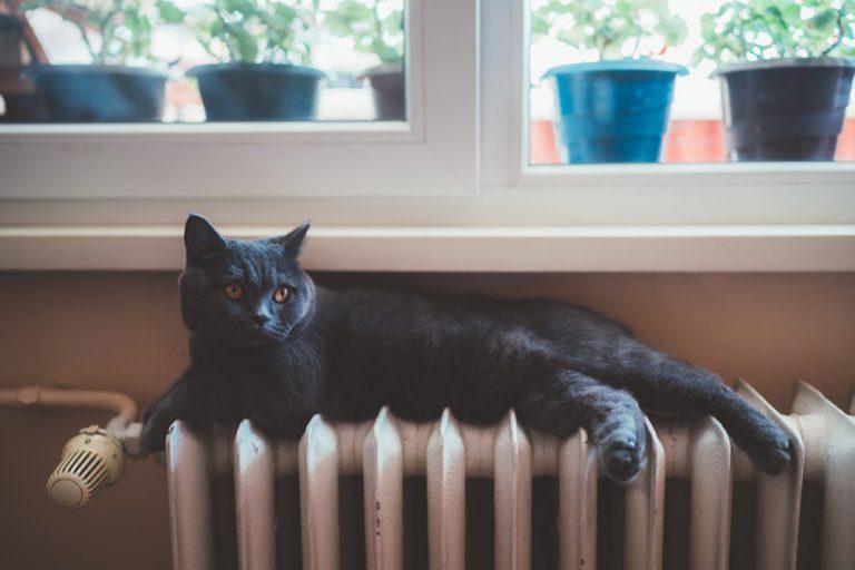 Katze sitzt auf einem Heizkörper.